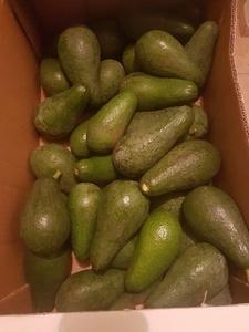 אבוקדו טיג - ללא ריסוס - כ-500 גרם