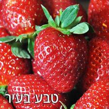 תות שדה אורגני